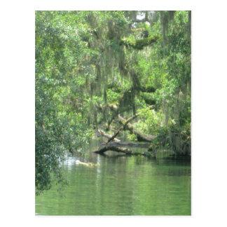 Blue Springs River Florida Postcard