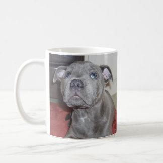 Blue_Staffordshire_Bull_Terrier_Puppy, Mug