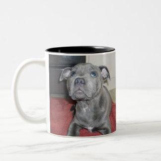 Blue_Staffy_Puppy_Awe_Please,_Two_Tone_Coffee_Mug. Two-Tone Coffee Mug