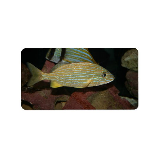 blue striped yellow fish saltwater animal