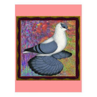 Blue Swallow Pigeon Framed Postcard
