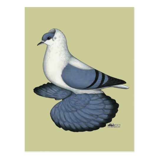 Blue Swallow Pigeon Postcard