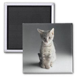Blue Tabby Kitten Square Magnet
