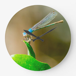 Blue Texas Damselfly Resting on a Leaf Large Clock