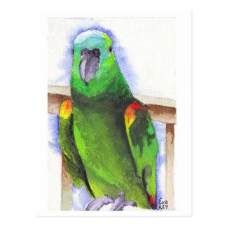 Blue The Parrot Postcard