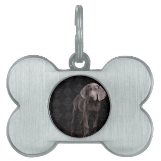 Blue the Weimaraner Puppy Pet Name Tag