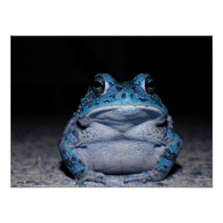 Blue Toad Poster