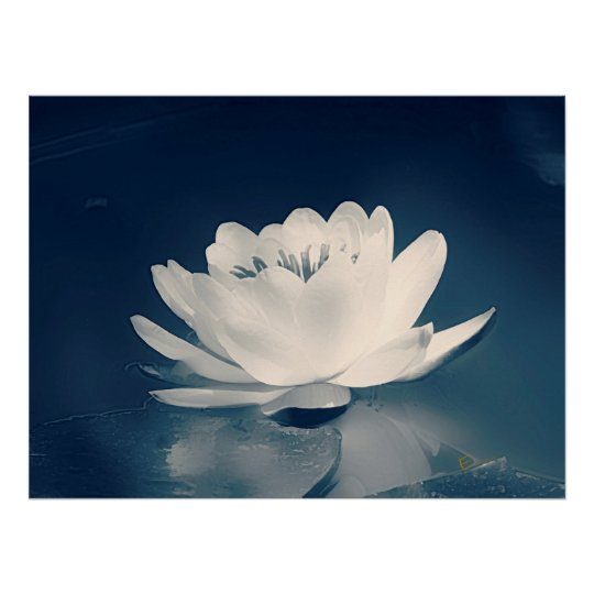 Blue Toned Lotus Flower Poster