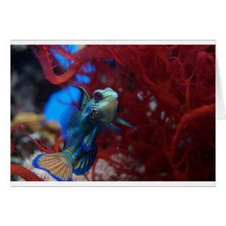 Blue tropical fish card