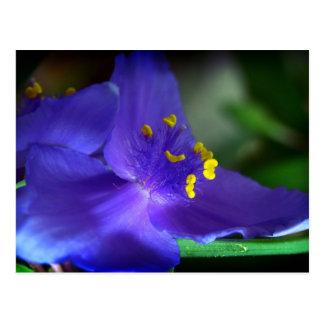 Blue Velvet Postcard