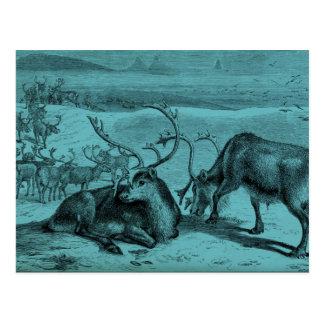 Blue Vintage Reindeer Illustration Postcard