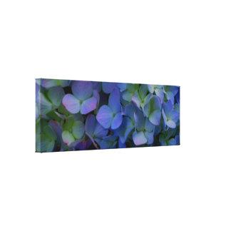 Blue violet  Hydrangeas Canvas Print
