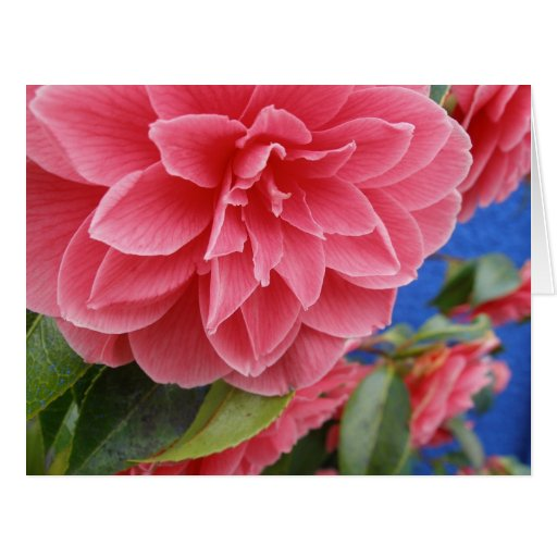 Blue Wall Camellias Mother's Day Greeting Cards