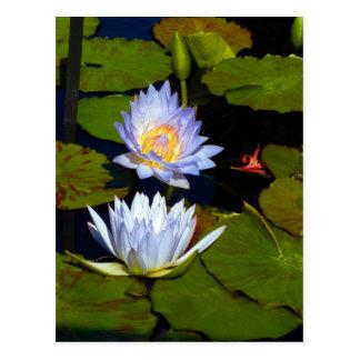 Blue Water Lilies Postcard