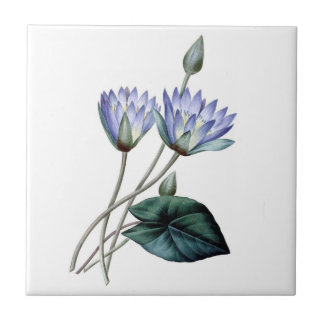 Blue Water Lilies Tile