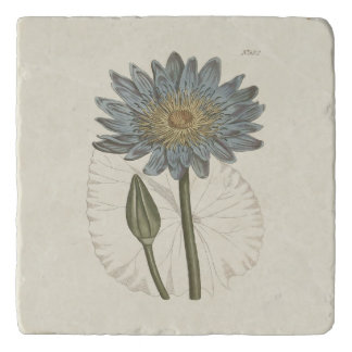 Blue Water Lily Botanical Illustration Trivet