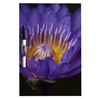 Blue water lily Dry-Erase whiteboards