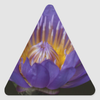 Blue water lily triangle sticker