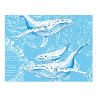 Blue Whales Family Postcard