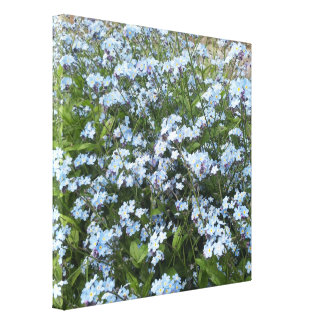 Blue wild Forget-Me-Not flowers, canvas 12x12