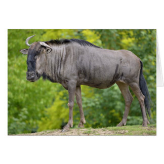 Blue wildebeest card