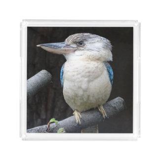 Blue-winged kookaburra acrylic tray