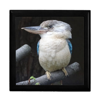 Blue-winged kookaburra gift box
