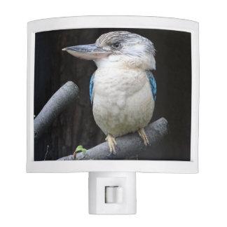 Blue-winged kookaburra nite light