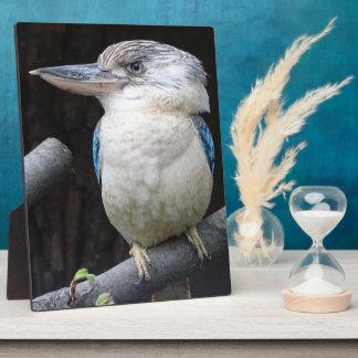 Blue-winged kookaburra plaque