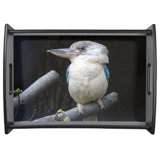 Blue-winged kookaburra serving tray