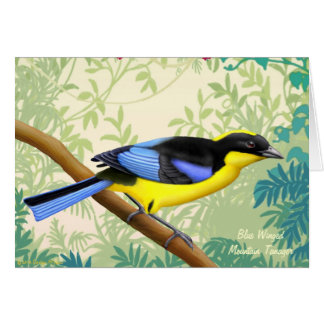 Blue Winged Mountain Tanager Bird Card