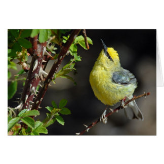 Blue-Winged Warbler Greeting Card