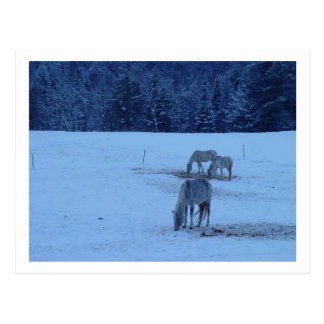Blue Winter Horses Postcard