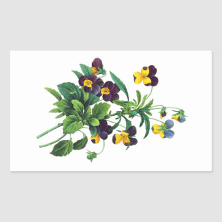 Blue Yellow and Purple Pansies By PJoseph Redoute