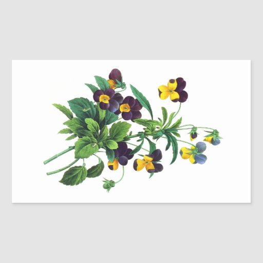 Blue Yellow and Purple Pansies By PJoseph Redoute Stickers