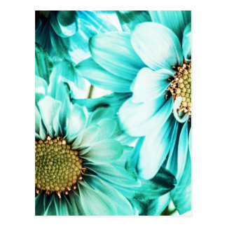 Blue & Yellow Daisies Postcard