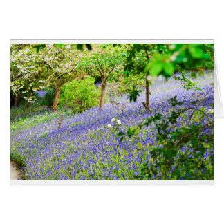 Bluebell Bank Card