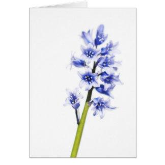 Bluebell flower Blank Greeting Card