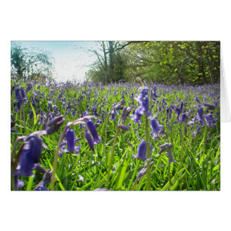 Bluebell Meadow Card