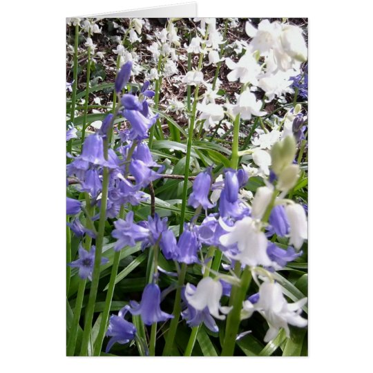 Bluebell Photos / details - Spring 2016 Card