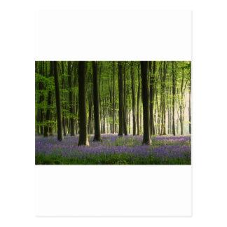 Bluebell Woodland Postcard