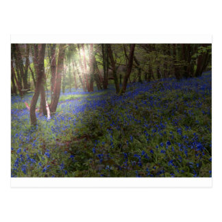 Bluebell Woods Postcard with Sunbeam