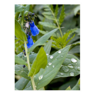 Bluebells and Raindrops Postcard