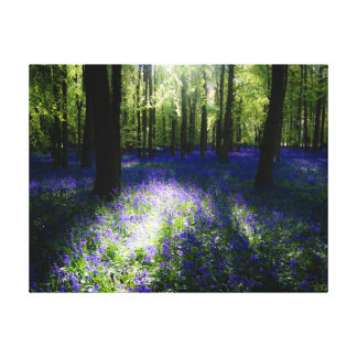 Bluebells at dusk, Dockey Wood, Ashridge Canvas Print