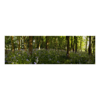 Bluebells In A Forest Poster