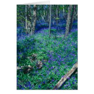 Bluebells In The Wood Card