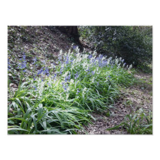 Bluebells in Woodland poster 6