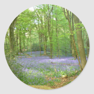 Bluebells in Woods Classic Round Sticker