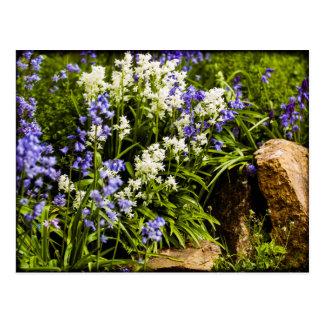 Bluebells Postcard