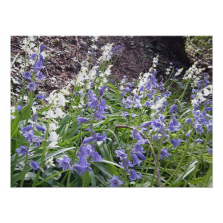 Bluebells poster 5 bit bigger than other one avail